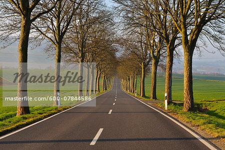 Country Road in Morning, Echte, Kalefeld, Harz, Lower Saxony, Germany