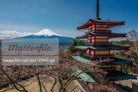 Chureito pagoda with blooming cherry trees and Mount Fuji in the background, Fujiyoshida, Yamanashi Prefecture, Japan