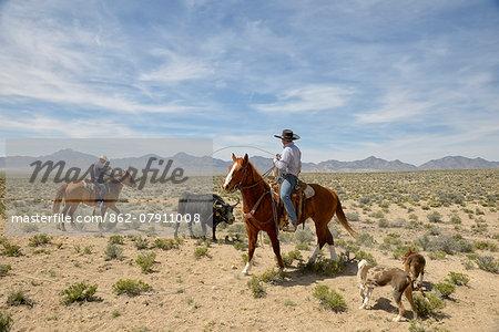 Cowboys near Warm Springs, Nevada, USA  MR