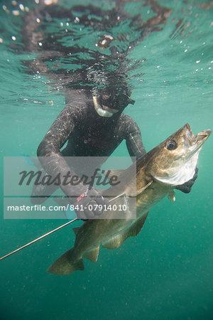 British Spearfishing Championships, Thurlestone. Devon, England, United Kingdom, Europe
