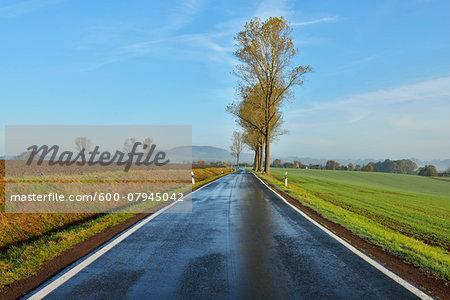 Country Road in Morning, Freiensteinau, Vogelsbergkreis, Hesse, Germany