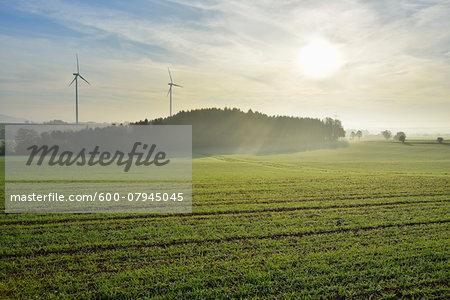 Countryside in Morning with Sun, Freiensteinau, Vogelsbergkreis, Hesse, Germany