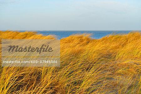 Sand Dunes with Sea, Helgoland, Dune, North Sea, Island, Schleswig Holstein, Germany