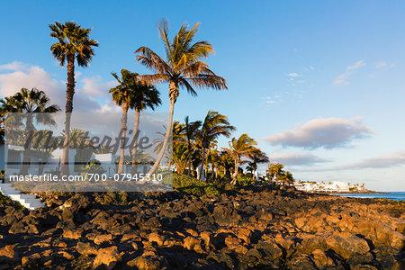 Palm trees on the beach at sunset, Puerto del Carmen, Lanzarote, Las Palmas, Canary Islands