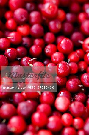 Cranberries (full frame)