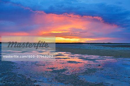 Marshland at Sunset, Digue a la Mer, Camargue, Bouches-du-Rhone, Provence-Alpes-Cote d'Azur, France
