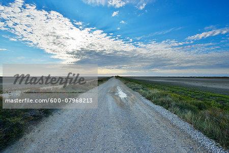 Gravel Road through Marshland, Digue a la Mer, Camargue, Bouches-du-Rhone, Provence-Alpes-Cote d'Azur, France