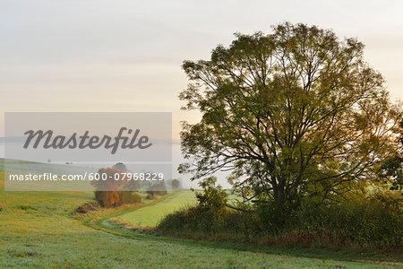 Countryside with Morning Mist in Autumn, Nastatten, Rhein-Lahn-Kreis, Rhineland-Palatinate, Germany