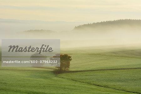 Countryside with Morning Mist, Hainau, Rhein-Lahn-Kreis, Rhineland-Palatinate, Germany