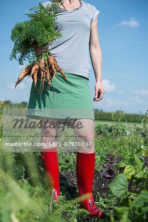 Gardening woman holding carrots harvest
