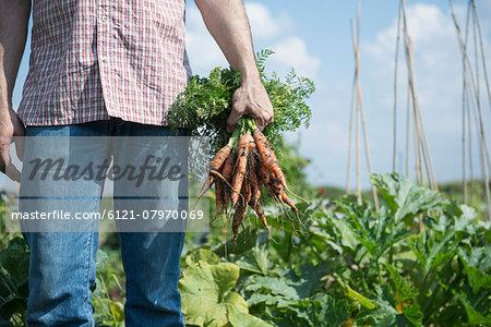 Man detail gardening crop carrots bunch