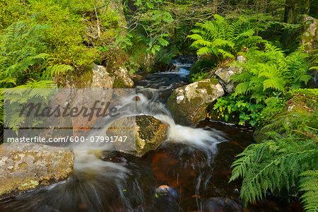 Mountain Stream, Vosges Mountain Range, Vosges, Alsace, France