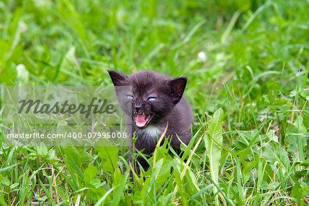 Small cute kitten in the grass