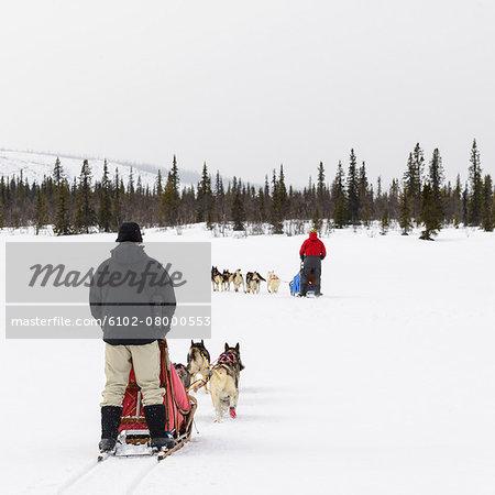 Men behind dog sledges