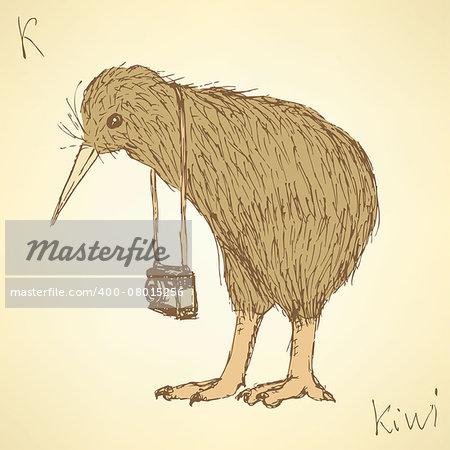 Sketch fancy kiwi bird in vintage style, vector
