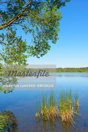 Lake Nieder-Mooser-Teich, Vogelsberg District, Hesse, Germany