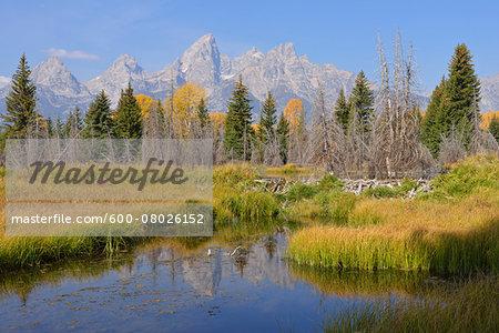Schwabacher Landing with Teton mountain range in background, autumn, Jackson Hole, Grand Teton National Park, Wyoming, USA
