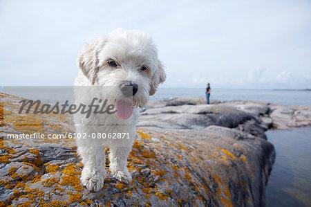 Dog on rocky coast