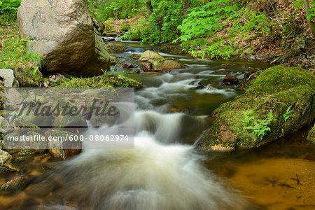 Ilse, Ilse Valley, Heinrich Heine Trail, Ilsenburg, Harz National Park, Harz, Saxony-Anhalt, Germany