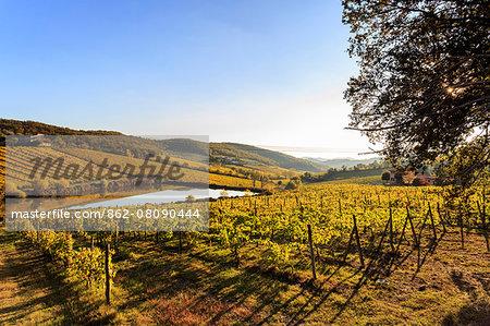 Italy, Italia. Tuscany, Toscana. Siena district. Chianti. Radda in Chianti
