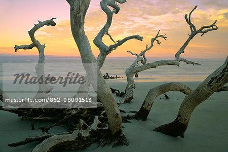 USA, Georgia, Jekyll Island, Driftwood beach at sunset