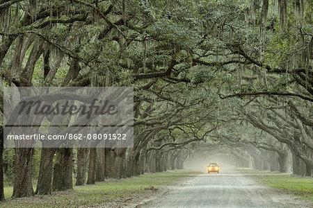 USA, Georgia, Savannah, Wormstoe State Historic site, oak alley