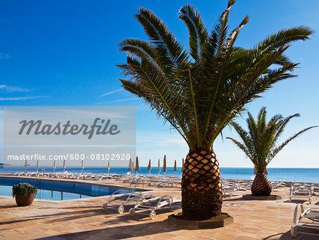 Sunbeds and Closed Sunshades by Palm Tree at Hotel, Cala Ratjada, Majorca, Balearic Islands, Spain