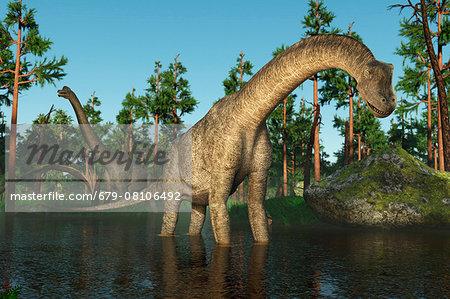 Brachiosaurus, computer illustration.
