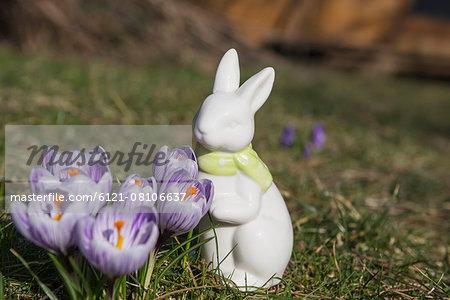 Purple crocus flowers with decorative rabbit in a garden, Munich, Bavaria, Germany