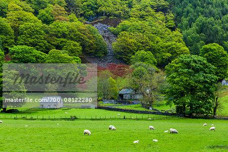 Farmland near Bala, Gwynedd, Wales, United Kingdom
