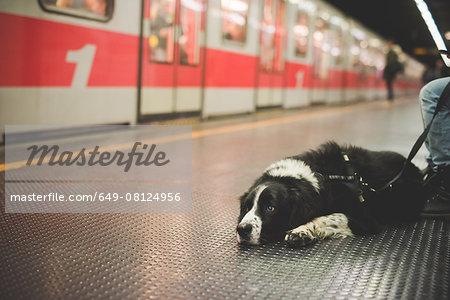 Portrait of dog lying subway station floor