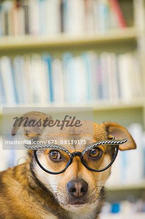 Portrait of a dog wearing glasses