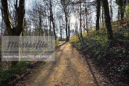 Park Path with Sun, State Fuerstenlager, Bensheim, Odenwald, Hesse, Germany