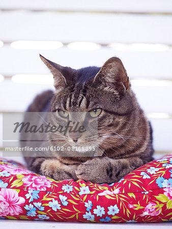 Cat lying on pillow