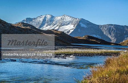 Blooming of eriofori (cotton grass), Levanne mountains. Gran Paradiso National Park, Alpi Graie (Graian Alps), Italy, Europe