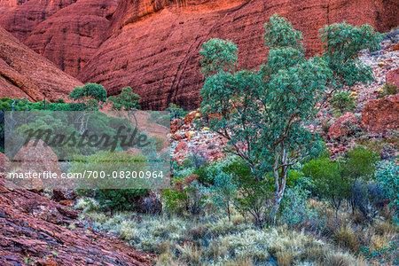 Valley of the Winds, Olgas (Kata Tjuta), Uluru-Kata Tjuta National Park, Northern Territory, Australia