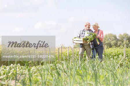 Senior couple harvesting vegetables in sunny garden