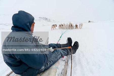 Dog sledge, Greenland, Denmark, Polar Regions