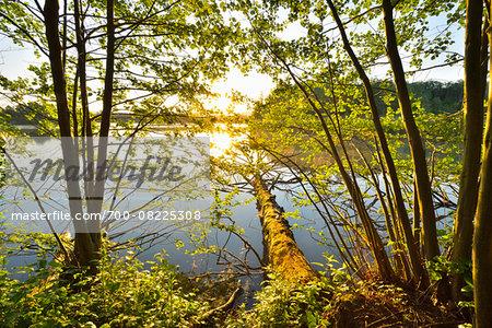 Sun Shining through Trees on the Shoreline of a Lake, Niedernberg, Miltenberg-District, Churfranken, Franconia, Bavaria, Germany