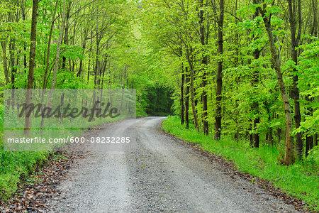 Forest Road in Spring, Miltenberg, Schippach, Miltenberg District, Odenwald, Bavaria, Germany