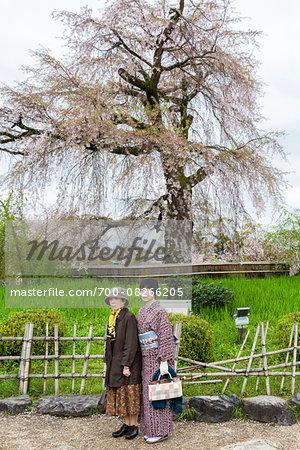 Women Standing by Old Blooming Weeping Cherry Tree at Maruyama Park, Higashiyama, Kyoto, Japan