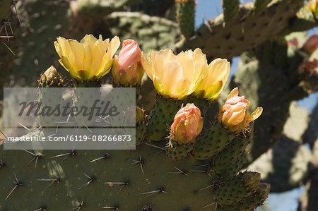 Botanical Gardens, San Miguel de Allende (San Miguel), Guanajuato State, Mexico, North America