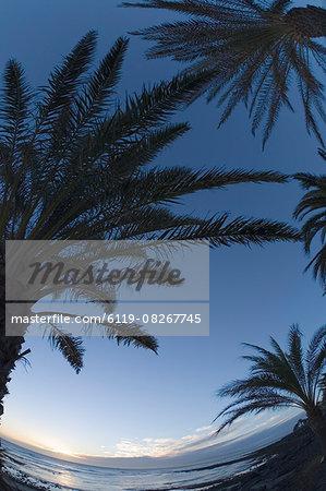 Palm horizon,Tenerife,Canary Islands,Spain,Atlantic,Europe
