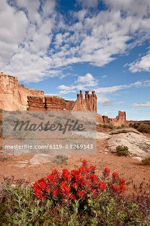 The Three Gossips and common paintbrush (Castilleja chromosa), Arches National Park, Utah, United States of America, North America