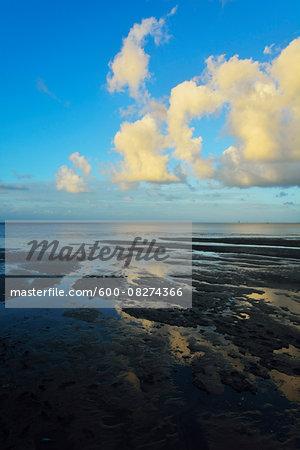Mud Flat on Coast, Cairns, Queensland, Australia