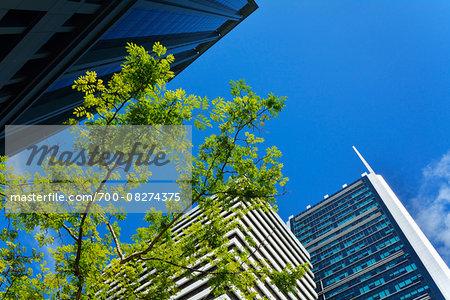 Skyscraper Facades with Tree branch and blue sky, Brisbane, Queensland, Australia