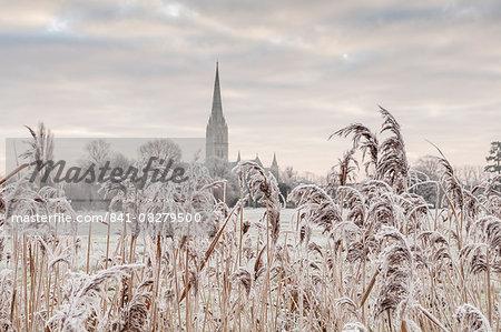 Salisbury athedral at dawn in winter, Salisbury, Wiltshire, England, United Kingdom, Europe