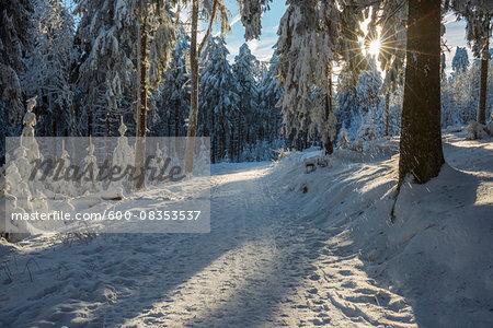 Snow Covered Winter Forest with Path and Sun, Grosser Feldberg, Frankfurt, Taunus, Hesse, Germany