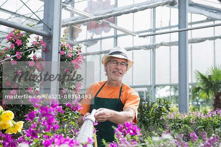 Male gardener watering plants in greenhouse, Augsburg, Bavaria, Germany