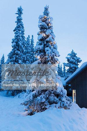 Illuminated tree at winter